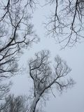 反对灰色冬天天空干燥树枝的干燥树枝在天空背景 摄影 免版税图库摄影
