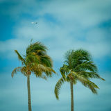 反对热带天空的棕榈树与飞机飞机在Backgroun 免版税库存照片