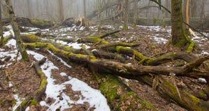 反对熔化的雪的树零件 库存图片