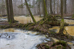 反对熔化的雪的树零件 免版税库存图片