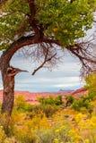 反对犹他秋天风景自然框架的唯一树 库存图片