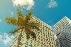 反对现代摩天大楼的热带棕榈 免版税图库摄影