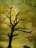反对生动的天空的树剪影 免版税库存图片