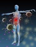 反对疾病的免疫 免版税库存图片