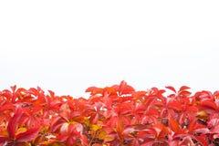 反对白色背景的秋叶 免版税库存照片