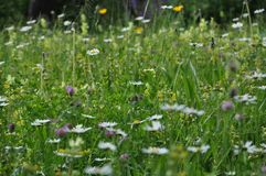 反对种类绝种,大家的野花可能做他们自己的贡献在庭院里 图库摄影
