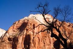 反对红色岩石沙漠Mesa的不生叶的树剪影对比 免版税库存图片