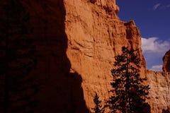 反对红色那瓦伙族人砂岩的针叶树剪影 库存照片