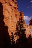 反对红色那瓦伙族人砂岩的针叶树剪影 免版税库存图片