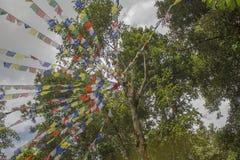 反对绿色森林和阴暗天空的西藏佛教祷告旗子 库存图片