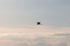 反对美丽的天空的苍鹭 库存图片