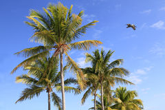 反对美丽的热带天空的可可椰子树 免版税库存照片