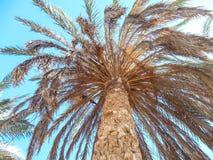 反对美丽的蓝天的完善的棕榈树 库存照片