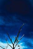 反对美丽的蓝天的树 免版税库存照片