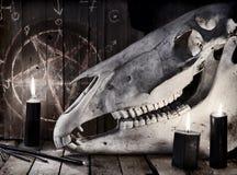 反对背景的可怕马头骨与pentagramBlack蜡烛和马头骨反对背景与五角星形 图库摄影