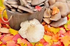 反对背景的蘑菇 免版税库存图片