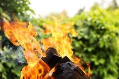 反对自然背景的灼烧的firewoods 关闭射击 免版税库存照片