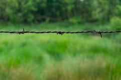 反对自然背景的生锈的铁丝网 库存照片