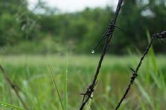 反对自然背景的生锈的铁丝网 库存图片