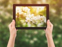 反对花的女性青少年的手举行片剂个人计算机 免版税库存图片
