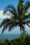 反对蓝天和海的棕榈树 免版税库存图片