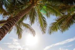 反对蓝天和白色云彩的绿色棕榈树 免版税库存图片