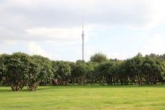反对蓝天的一个电视塔 绿色草坪和生长灌木在休闲停放 免版税库存照片