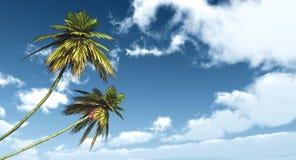 反对蓝天的两棵棕榈 库存图片