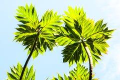 反对蓝天的两片小绿色叶子 免版税库存照片