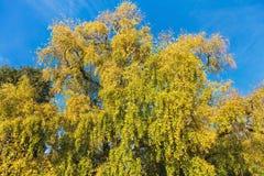 反对蓝天的五颜六色的树在秋天 免版税库存图片