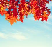 反对蓝天的五颜六色的秋叶 被定调子的图象 免版税库存图片