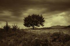 反对蓝天的偏僻的树在日落 与一棵孤立树的夏天风景在日落大麦领域在村庄阿塞拜疆 免版税库存图片