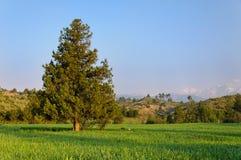 反对蓝天的偏僻的树 免版税库存图片