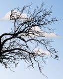 反对蓝天的光秃的树枝 库存图片
