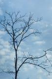 反对蓝天的光秃的树 库存照片