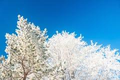 反对蓝天的冬天树 免版税库存照片
