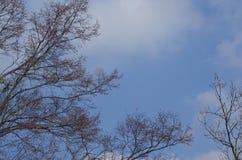 反对蓝天的分支 库存照片