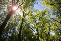 反对蓝天的密集的森林 免版税库存图片