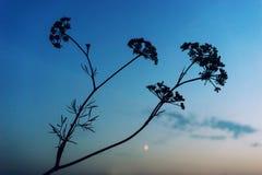 反对蓝天的布什植物 库存照片