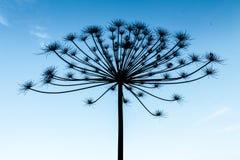 反对蓝天的干燥树 图库摄影