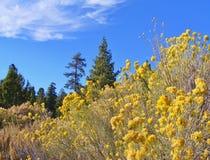 反对蓝天的明亮的黄色野花 库存照片