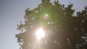 反对蓝天的树冠与阳光 股票视频
