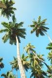 反对蓝天的棕榈树,在热带海岸,被定调子和被传统化的葡萄酒的棕榈树,椰子树,夏天树,减速火箭 库存照片