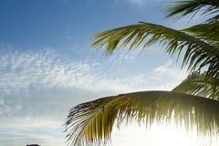 反对蓝天的棕榈树, Exuma,巴哈马 图库摄影