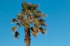 反对蓝天的棕榈树 库存照片