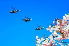 反对蓝天的樱花,飞行的军用直升机 库存图片