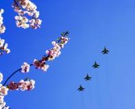反对蓝天的樱花,飞行的军用飞机 免版税库存照片