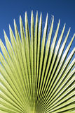 反对蓝天的沙漠植物 免版税图库摄影