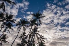 反对蓝天的热带棕榈树以了子弹密击与蓬松云彩 免版税图库摄影