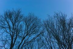 反对蓝天的空的树枝 免版税库存照片